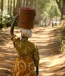 Volunteer Program in Uganda